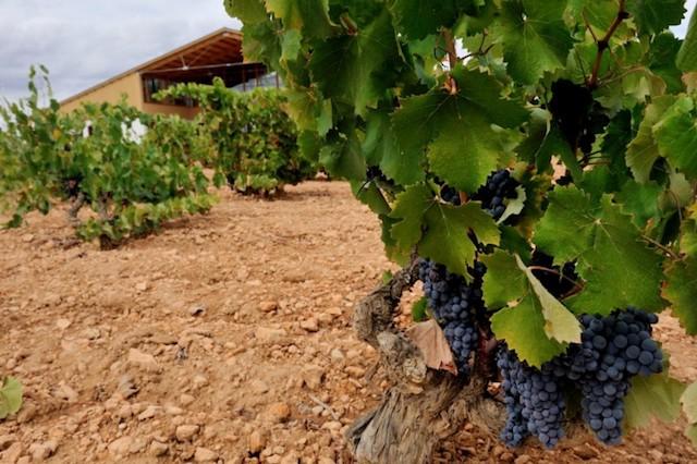 33730_yecla-wine-route-bodegas-barahonda_11485708289_large