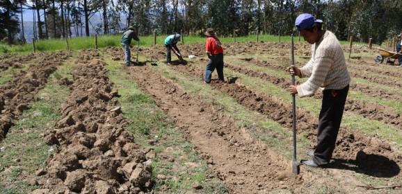 Políticas Agropecuarias: Retos para el Bicentenario