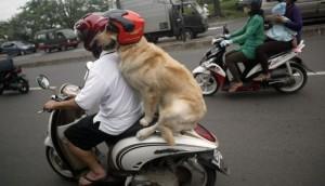 perro moto