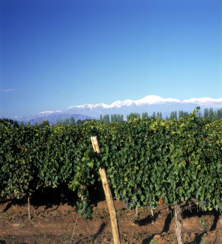 vigne-de-prs-caro-768x843