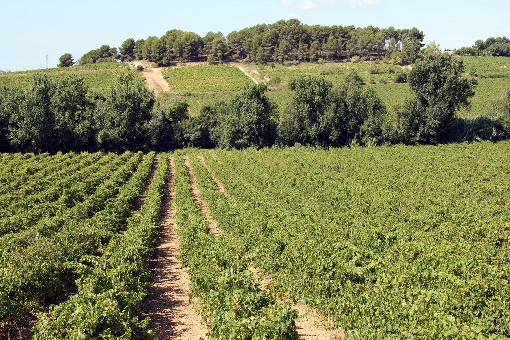 vinyamontenyans