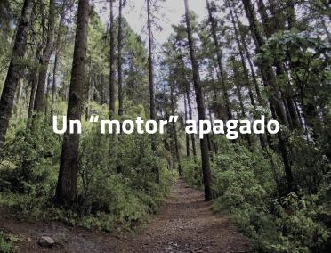 """El sector forestal: un motor """"apagado"""" de la economía peruana"""