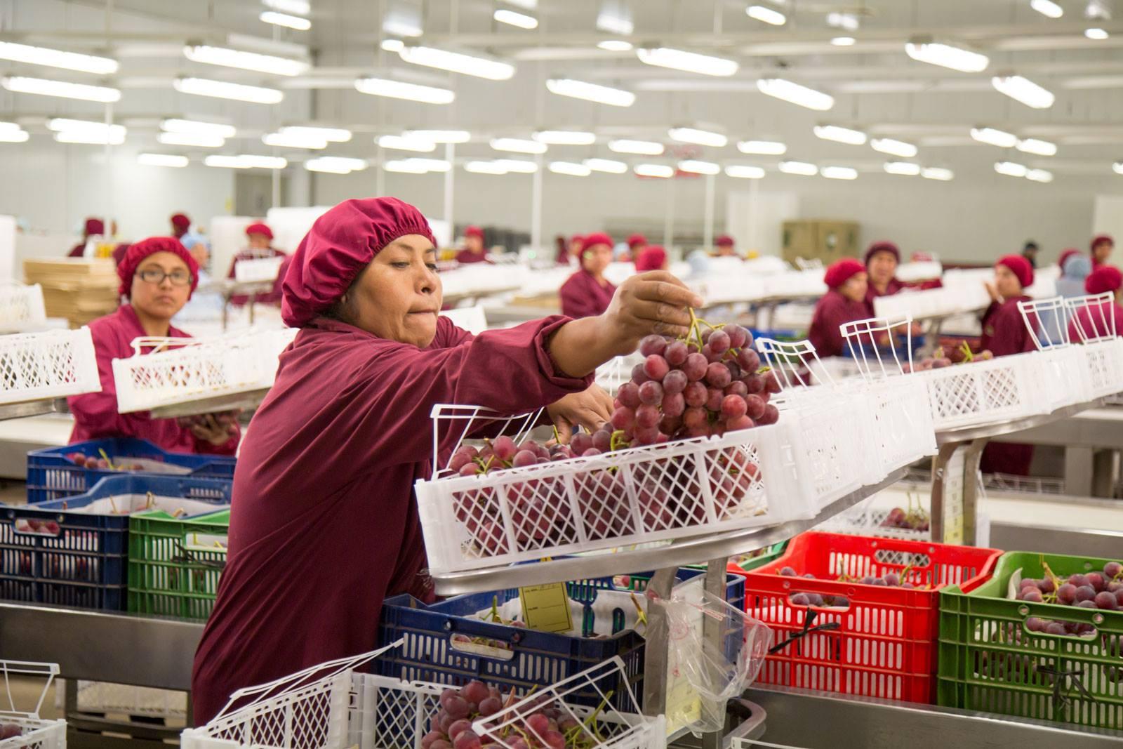 Ley de Promoción Agraria y su impacto económico y social