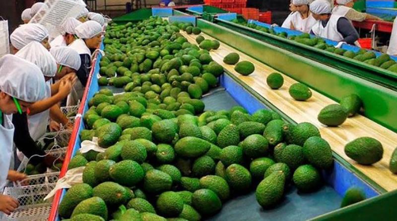 Escenarios de riesgo y oportunidades para el agro peruano