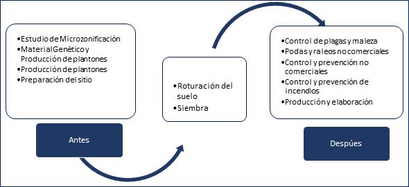 Ilustración 1 Fases de proyecto Forestal