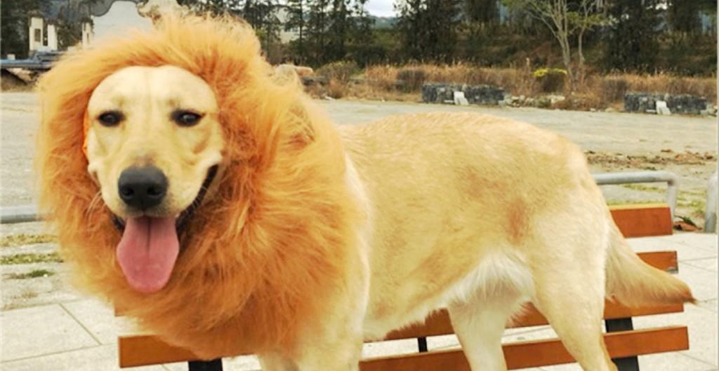 dog-lion