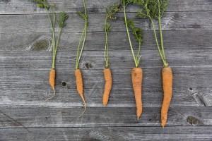 vegetables-1666632_960_720